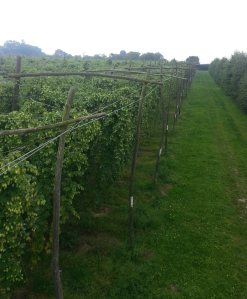A view of Gushmere Court Farm, taken by Robin Wright on one of their green hop brew days