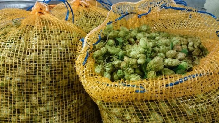 green-hops-stuart-swann-02